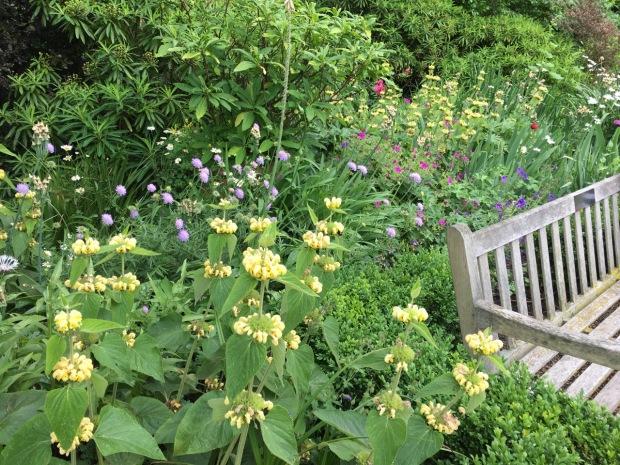 Perennial colour at Cadogan Place garden