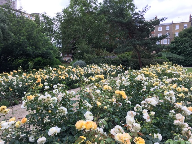 Roses at Cadogan Gardens North