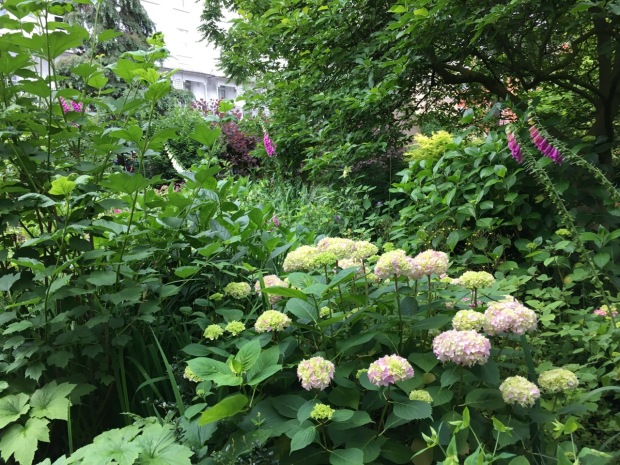 Shady foxgloves and Hydrangea at Cadogan Gardens South