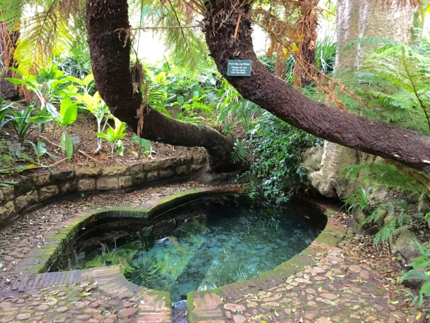 Colonel's Bird Bath, where the spring water bubbles up at a steady 18 degrees all year round