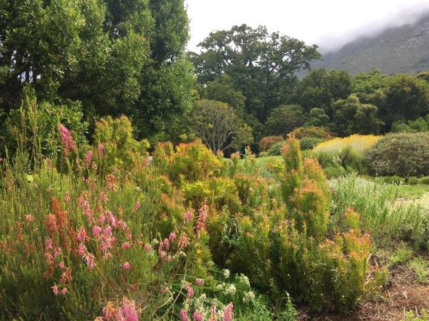 Kirstenbosch National Botanic Garden, Cape Town