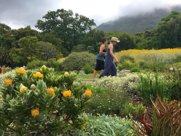 Kirstenbosch National Botanical Gardens, Cape Town