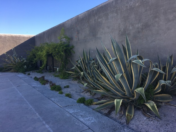 Mr Mandela's garden, Robben Island