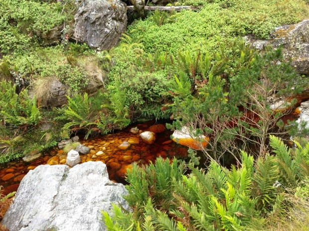 The water on Table Mountain is brown with tannins from the fynbos, but pure enough to drink