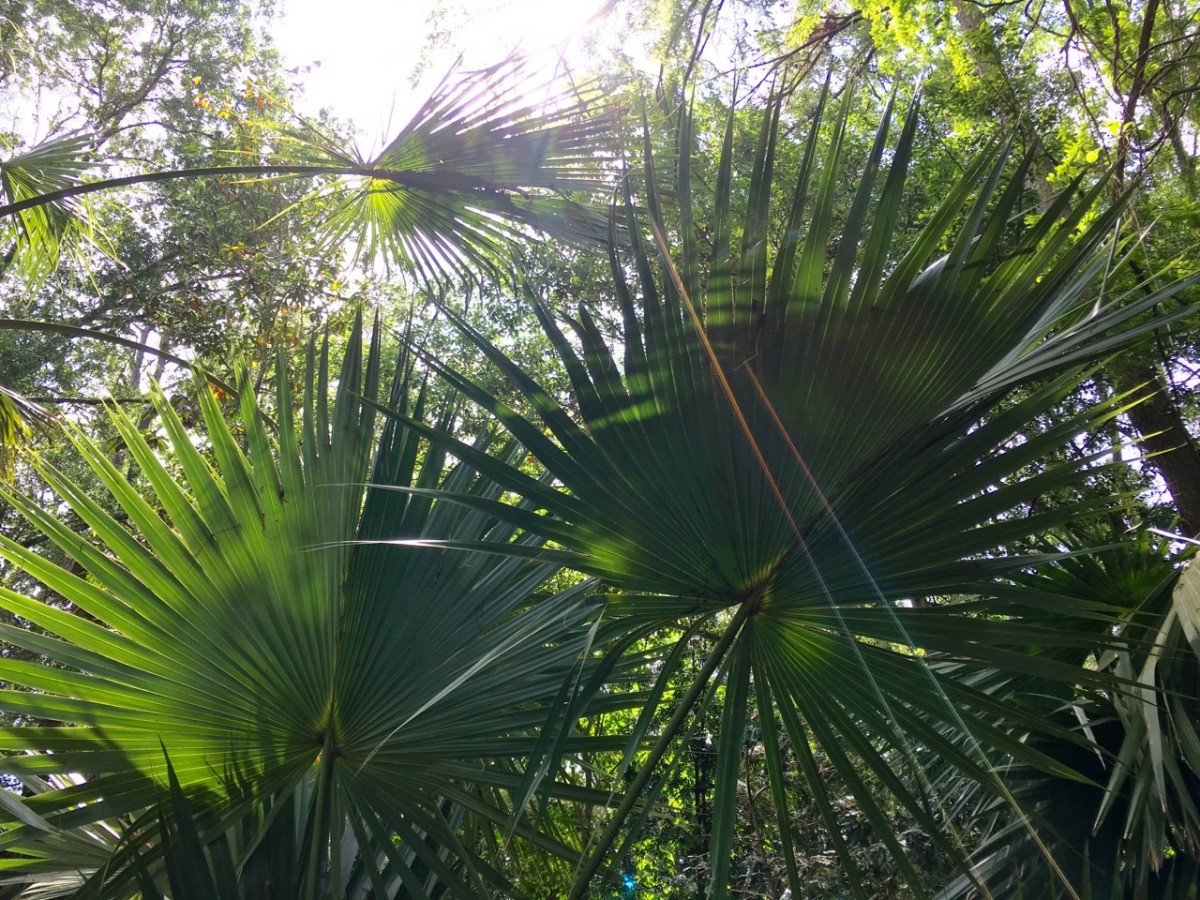 Peckerwood garden insider s tour texas janna schreier - Dallas home and garden show 2017 ...